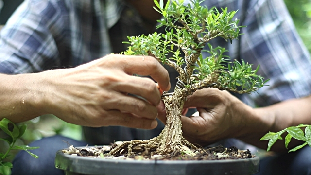 Bonsai Tree Therapy Try This Medical Alert Systems
